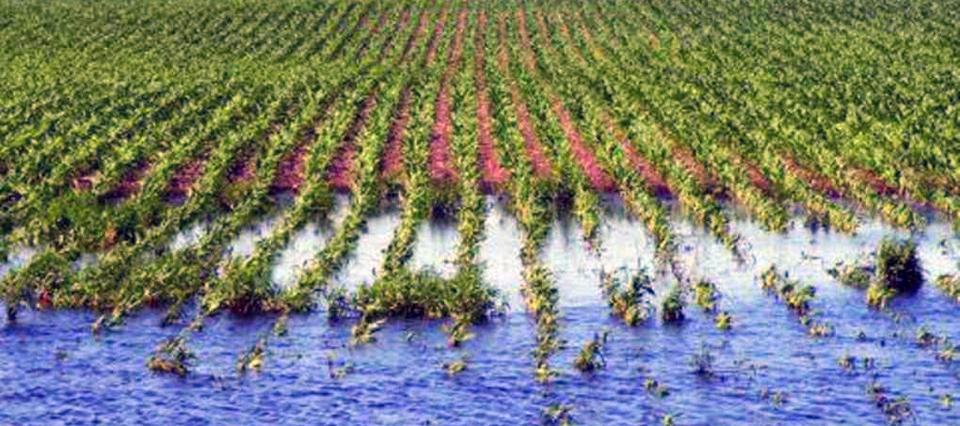 Pasada por agua, la soja se complica en el centro norte de Santa Fe