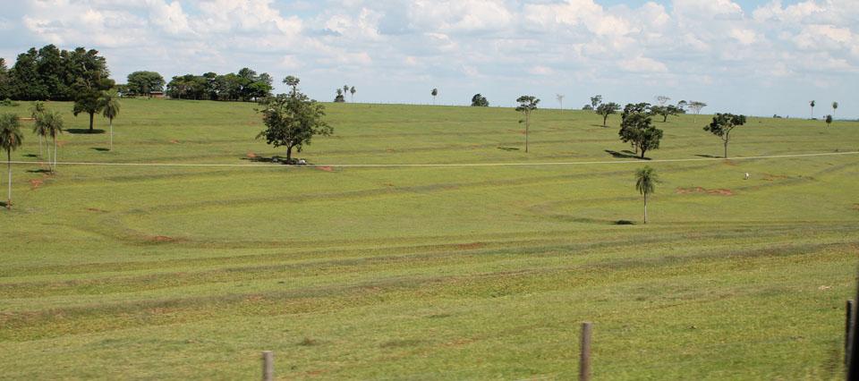 Campo Brasil
