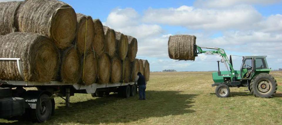Resultado de imagen para alfalfa rollos