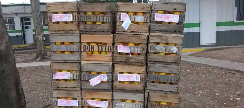 Decomisaron 400 kilos de cítricos cerca de Bahía Blanca