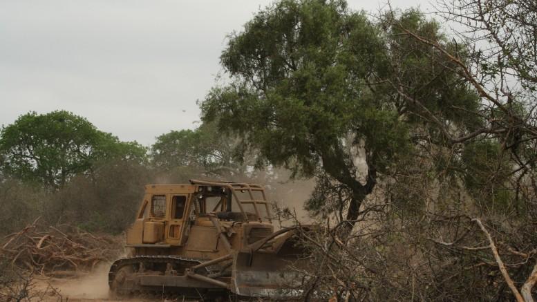 Comprueban que por desmontes disminuyó el 40% de los servicios ecosistémicos de Salta