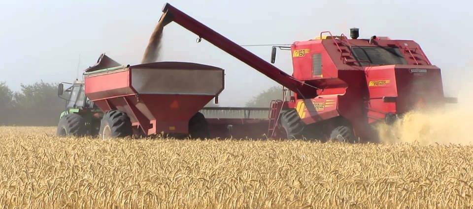 Se cosechará un millón de toneladas menos de trigo que el año pasado