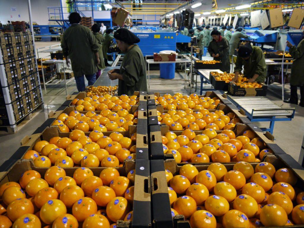 exportaciones citricos