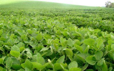 Mejor nutrición para un cultivo más rendidor