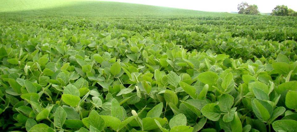 Avanzó en el senado paraguayo un impuesto a la exportación de soja