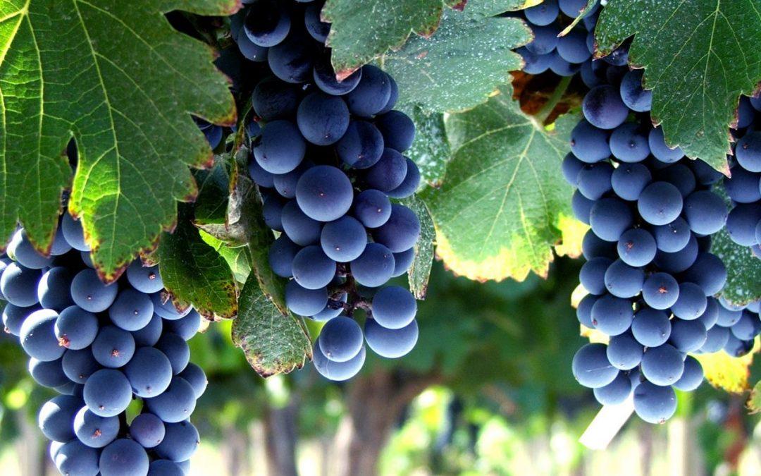 Chubut apunta a instalar la ruta del vino más austral del mundo como atractivo turístico
