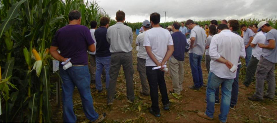maiz productores