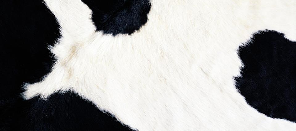 cuero vaca 960