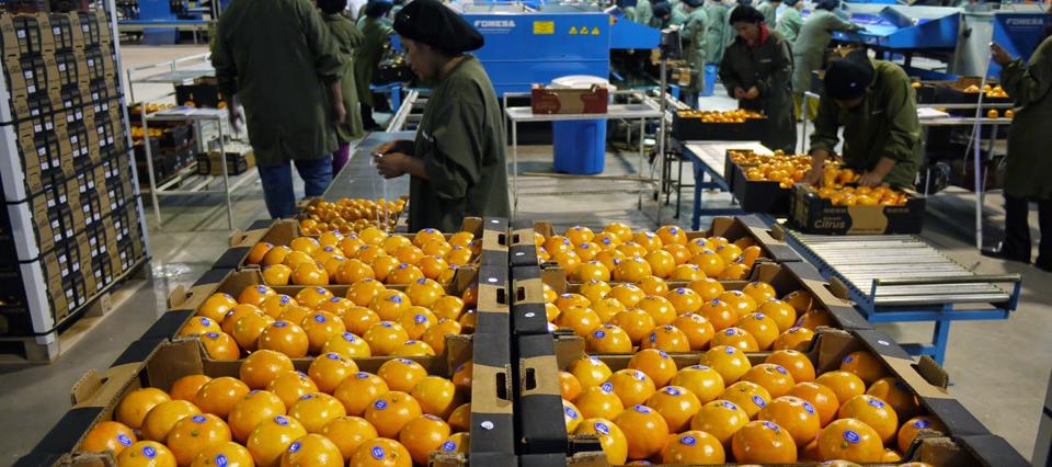 citricos exportacion