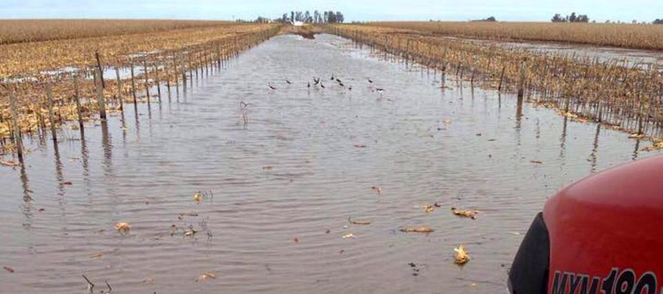 cosecha inundacion