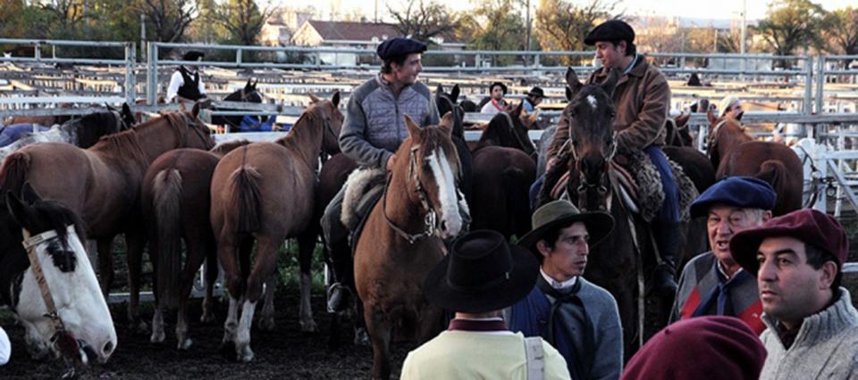 expo provincial del caballo