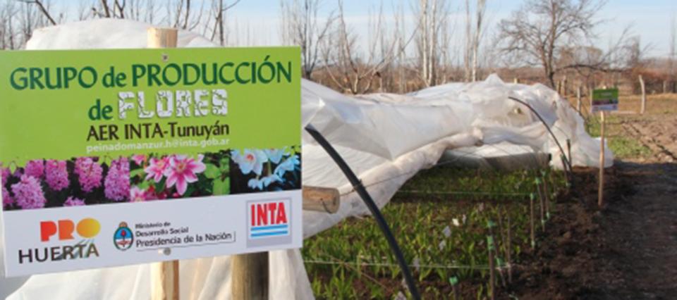El INTA impulsa la producción de bulbos florales en Mendoza