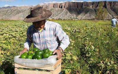 agro cultivos productores