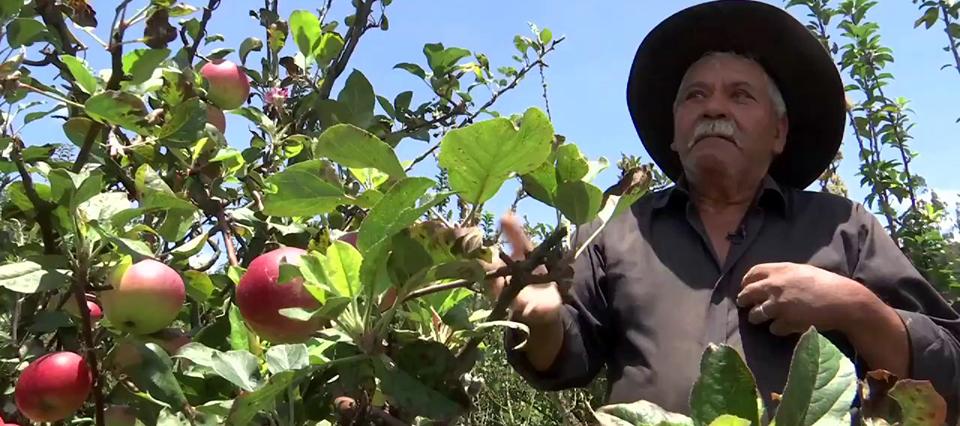 manzanas productor