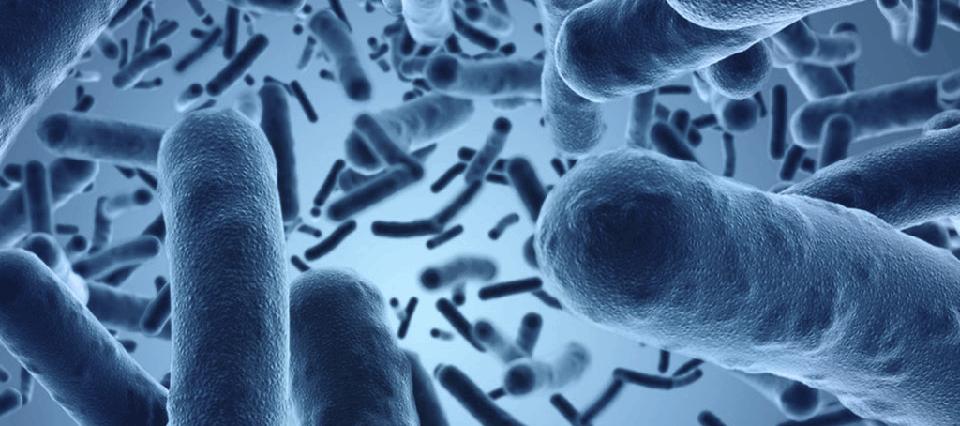 Tras una investigación nacional se podrían incorporar probióticos a la leche en polvo