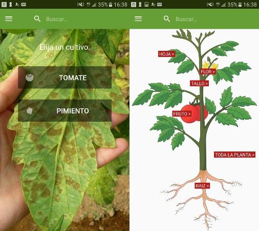 tomate-diagnostico-web2