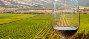 vinos copa paisaje