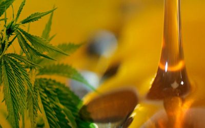 Reglamentaron la ley que autoriza el uso medicinal del cannabis