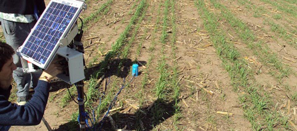 Un 70 % del rinde del trigo se explica por el agua almacenada en el suelo