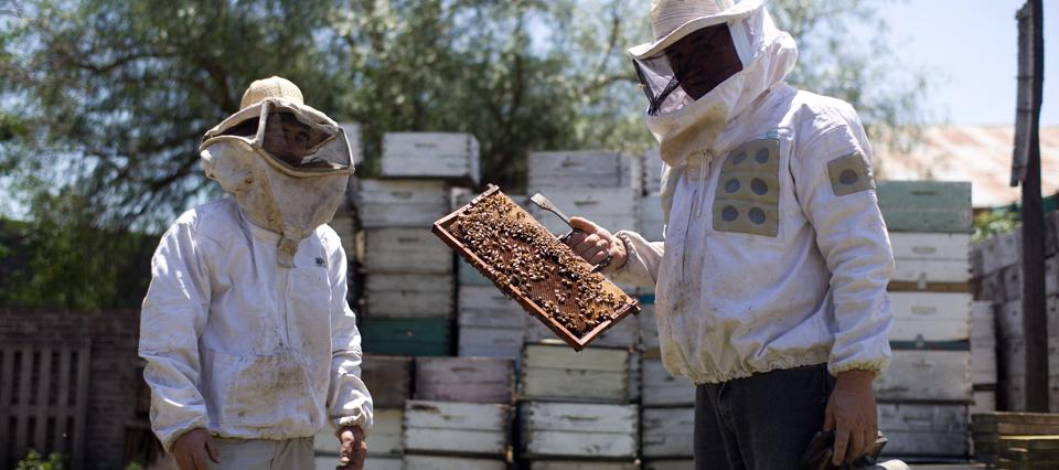 Lanzan una convocatoria para conformar alianzas entre productores y empresas agroalimentarias