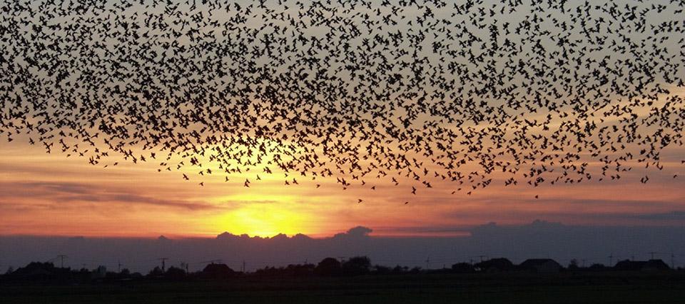 migracion aves 960