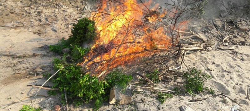 Infocampo queman 200 plantas c tricas de un vivero a cielo for Viveros en capital