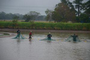 Las Palmas, ChacoEmpresa de arroz organico y pacu en acuicultura