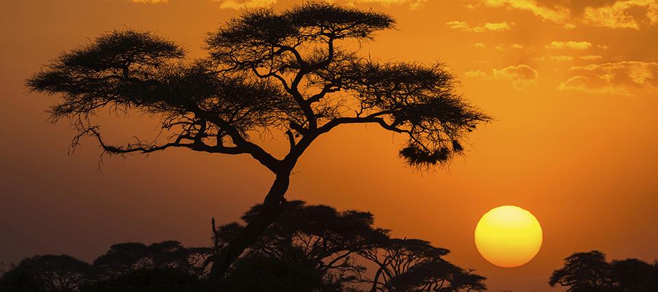 Se viene la II Cumbre Internacional LAC África para potenciar el comercio intercontinental