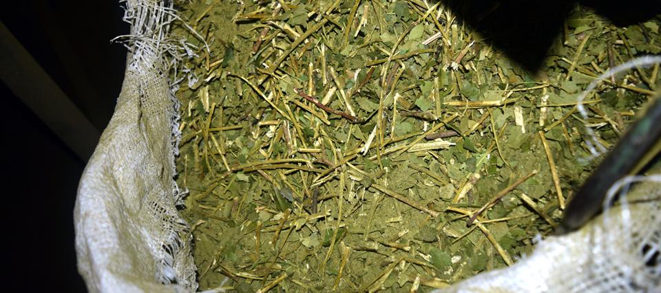 Fijaron el precio de la tonelada de hoja de yerba mate para octubre- marzo