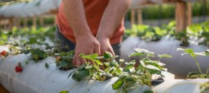 cultivos organicos agro productor