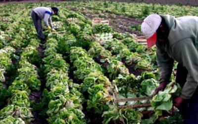horticultores