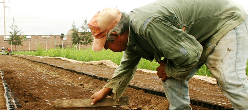 El seguro de vida para el personal rural fue establecido en 5,5 salarios mínimos