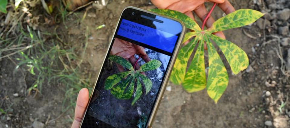 Una app usa inteligencia artificial para detectar enfermedades en cultivos