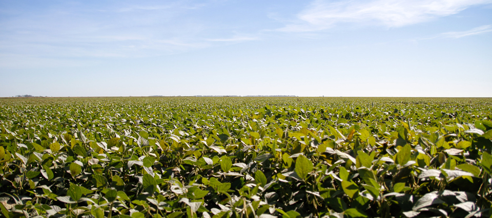 Aumentó 4,25% el uso de semilla fiscalizada en la campaña de soja 2016/17