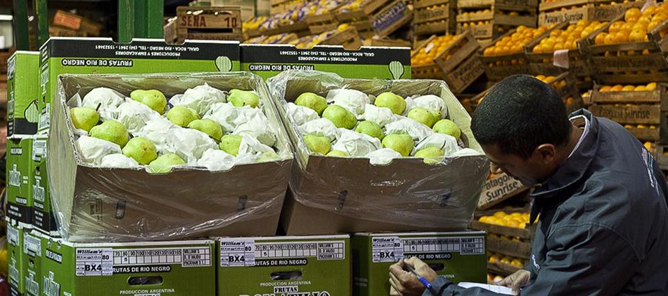 Otro mal dato para las peras y manzanas: en lo que va del año cayeron 17,4% las exportaciones