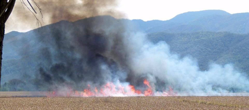 Un incendio arrasó con 140 hectáreas en Jujuy y se dañaron bosques nativos