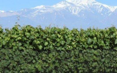 Llega una revolución tecnólogica en el mundo vitivinícola