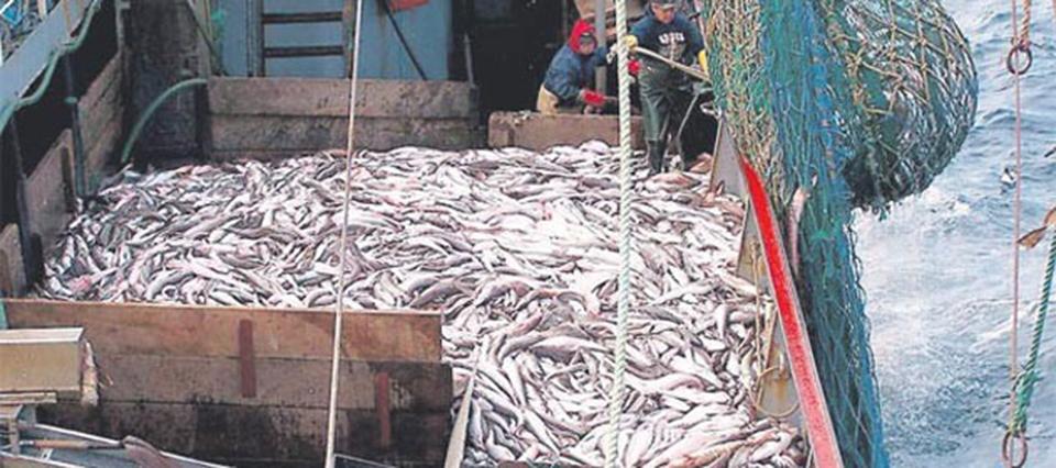 pesca merluza