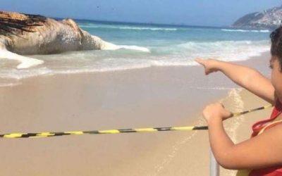 Apareció una ballena muerta en Ipanema y aseguran que es consecuencia del cambio climático