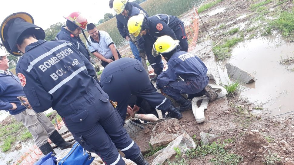 vaca rescatada1
