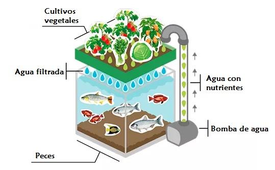Infocampo con la acuaponia producir peces y hortalizas al for Estanques para piscicultura