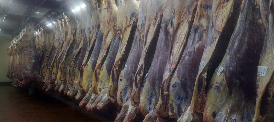 Frigorifico Eco Carnes   Ing Diego Calvari Jefe de asesoramiento de la calidad  4714 9289 diego.calvari@ecocarnes.com