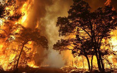 """LWS01.BASTROP (ESTADOS UNIDOS).5/9/2011.- Un incendio arrasa el parque natural Bastrop State Park en Texas, Estados Unidos, hoy lunes 5 de septiembre de 2011.Dos personas han muerto y cientos de casas han sido arrasadas por un incendio múltiple en el estado de Texas (EE.UU.) que ha sido avivado por los fuertes vientos de la tormenta tropical """"Lee"""", según recoge hoy la prensa estadounidense.EFE/LARRY W. SMITH"""