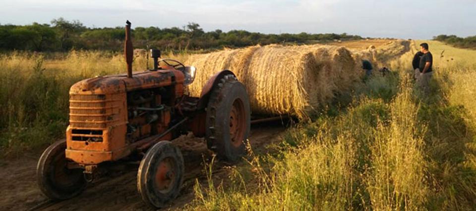 Tragedia en Colonia Menonita: un chico de 14 años murió aplastado por un tractor