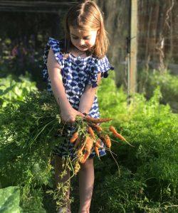 antonia zanahorias