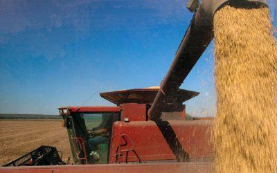cosecha soja granos