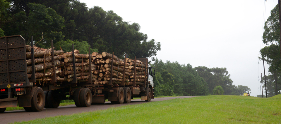 Macri prometió avances a la Mesa Foresto Industrial en construcción y bosques cultivados