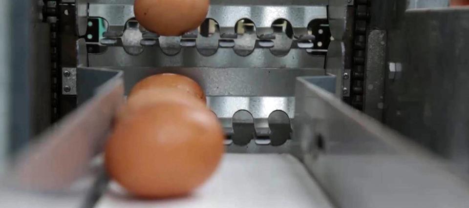 Desarrollaron maquinarias para productores de huevos en Córdoba y Santa Fe