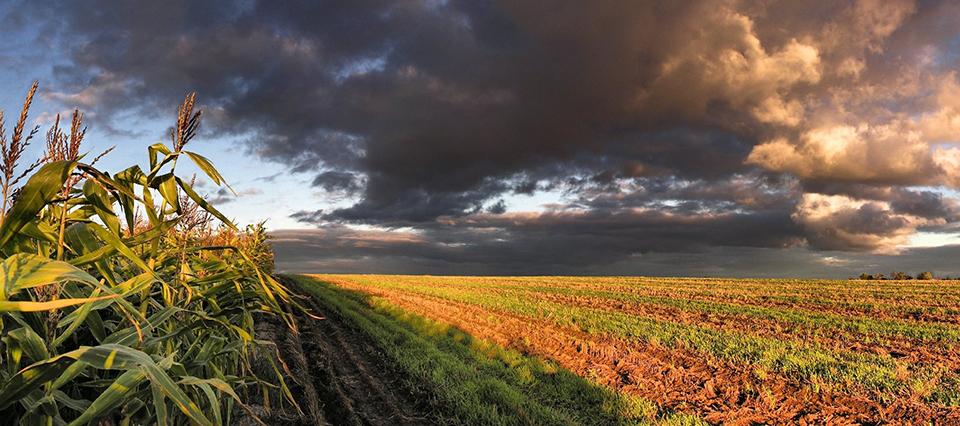 Llegan las lluvias a la región pampeana entre el 11 y el 17 de enero