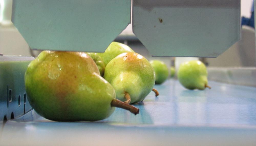 Las frutas del Alto Valle rionegrino